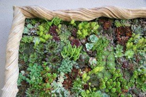 Detalle jardín vertical a base de suculentas