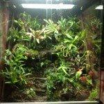 Natuterrario con plantas vivas y climatizado