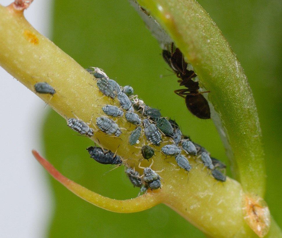 Protege tus plantas las plagas m s comunes for Plantas ornamentales mas comunes