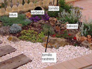 Ejemplo de rocalla con aromáticas y plantas rastreras xerófitas